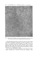 Pagina 50