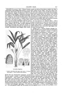 Pagina 917